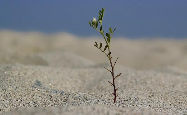 Réchauffement : Les végétaux s'adapteraient plus facilement qu'on ne le pensait