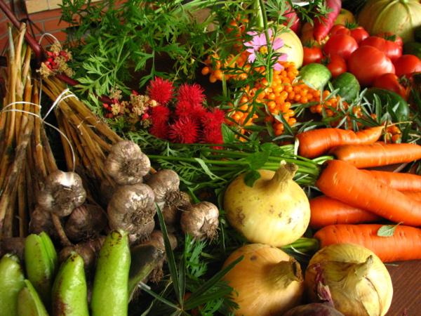 L'agriculture bio a atteint un rythme de croissance historique en France
