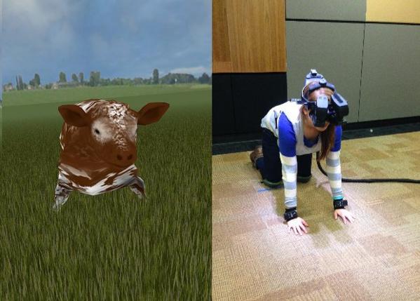 Souffrance animale : quand la réalité virtuelle accroît notre empathie pour une vache conduite à l'abattoir