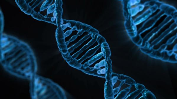 Pour la première fois, le Royaume-Uni autorise les bébés conçus à partir de 3 ADN