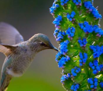 Des ailes à la place des pales : cette étonnante éolienne imite le vol du colibri