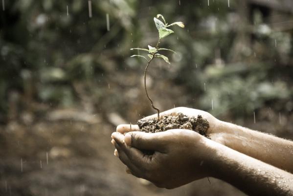 Présidentielle : 14 propositions de la Fabrique Écologique pour peser sur le débat