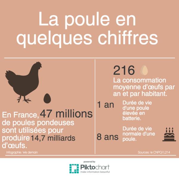 Proximité, qualité, réduction des déchets : trois start-up qui rendent les poules heureuses