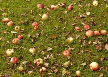 Glaner les fruits et légumes gratuits les plus proches de chez soi : il y a une appli pour ça