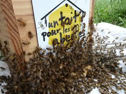 Dix solutions simples pour sauver les abeilles, espèce en voie d'extinction