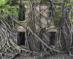 En images : quand la nature reprend les lieux abandonnés par l'Homme