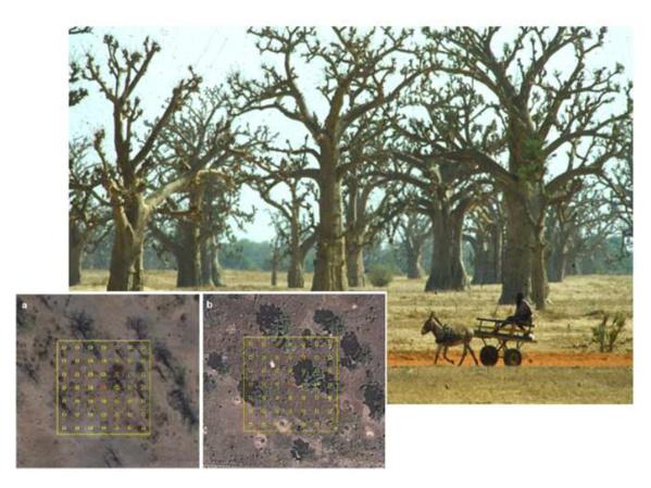 Des scientifiques découvrent 467 millions d'hectares de forêts dont on ignorait l'existence