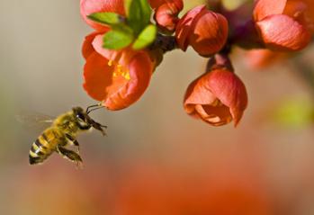 S'inspirer de la nature pour innover : le biomimétisme, pour le meilleur ou pour le pire
