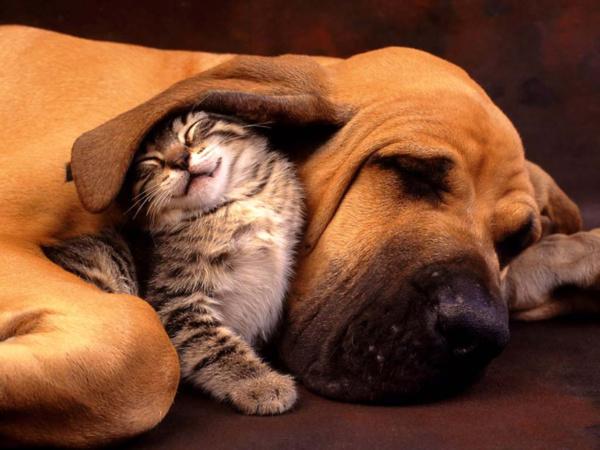Les chiens et chats américains consomment autant de calories que la population française