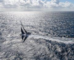 Le skippeur Fabrice Amedeo se lance dans un tour de France des microplastiques
