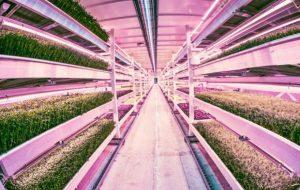 Londres : une ferme urbaine de 10 000 m2 dans un abri de la Seconde Guerre mondiale
