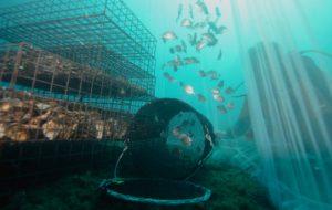 Avec ses nurseries marines, cette entreprise veut repeupler la mer
