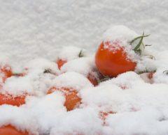 Mais qui veut vraiment des tomates toute l'année ?
