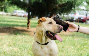 """Ces applis qui promettent d'aider à """"parler chien"""""""