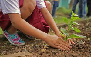 Planter des arbres, oui, mais après ?