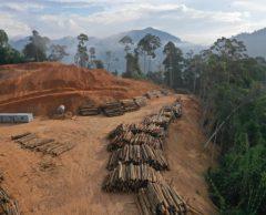 Brésil : la déforestation amazonienne bondit de 278 % en juillet