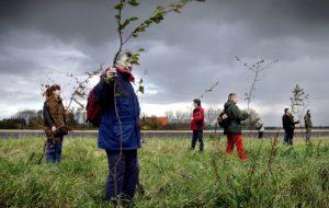 Plantons 1 000 milliards d'arbres pour sauver la vie sur Terre