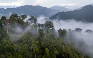 """Amazonie : """"Il faut un droit d'ingérence écologique"""""""
