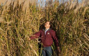 Combustible, isolant, bio-béton… connaissez-vous le miscanthus ?