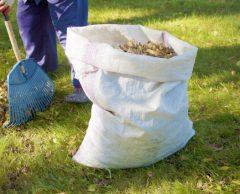 Amiens : 4000 foyers chauffés grâce aux feuilles mortes