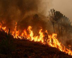 Comment la Corse a réduit par six les feux de forêts depuis les années 80