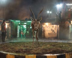 Ce photographe alerte sur la 6e extinction de masse