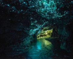 Et si l'on remplaçait les lampadaires par des arbres fluorescents ?
