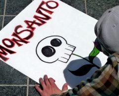 Des agriculteurs indiens font reculer le gouvernement sur les OGM