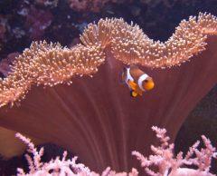 L'acidification des océans, une lourde menace pour la biodiversité