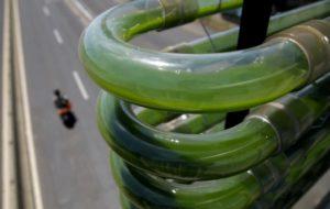 Des micro-algues au dessus des routes, une nouvelle arme anti-pollution