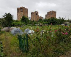 JO de Paris : les jardins ouvriers d'Aubervilliers se rebellent