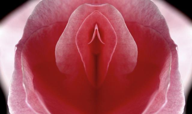 Les plantes, ces obsédées sexuelles