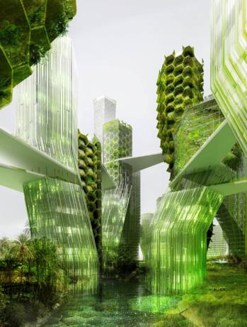 Bientôt des murs en algues pour dépolluer Paris