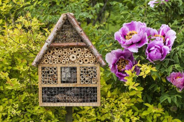 Dix bons gestes pour préserver la biodiversité dans son jardin