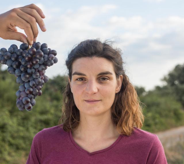 Vigne de Cocagne, le premier vignoble bio et solidaire