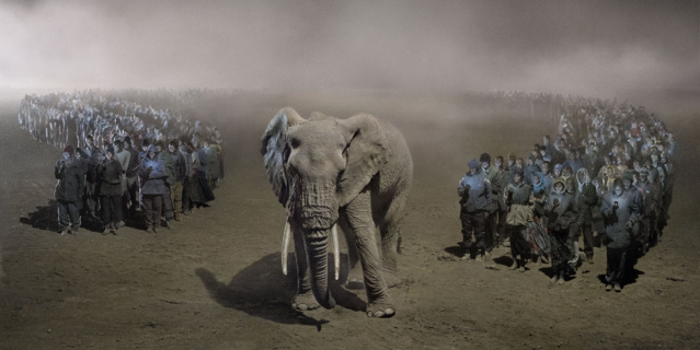 Animaux à l'agonie : ce photographe alerte sur la 6e extinction de masse