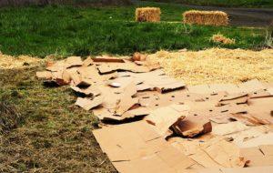 """La """"méthode carton"""", ou comment cultiver sur des déchets"""