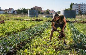 """Dans le 93, la ferme """"Zone sensible"""" cultive des légumes… et du lien social"""