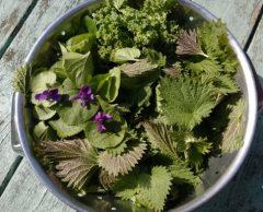 Cinq plantes comestibles à cueillir en bas de chez vous