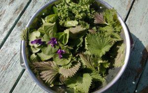 5 plantes comestibles à cueillir en bas de chez vous