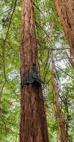 Des smartphones pour lutter contre la déforestation