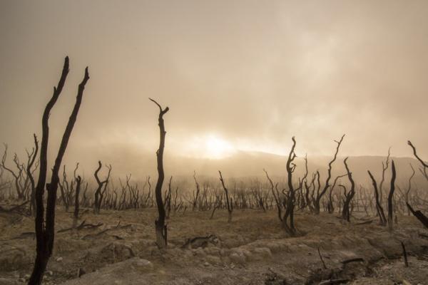 L'humanité vient d'épuiser toutes les ressources renouvelables en un an