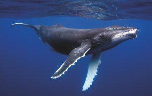3 solutions pour baisser le son dans les océans