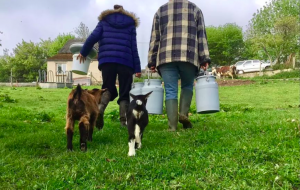 Partez en week-end à la ferme pour soutenir les producteurs