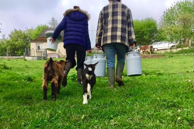 oh la vache - vacances à la ferme