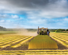 Normandie: une coopérative relance la production de t-shirts en lin