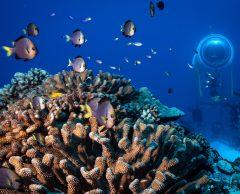 Under the pole : un habitat sous-marin pour étudier les coraux