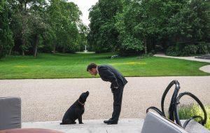 Présidentielle 2022 : la cause animale, nouvel enjeu électoral ?