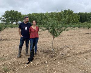 Protégé: Ils relancent la culture bio de l'amande en Provence