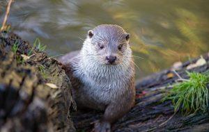 Animaux en danger : prêts à devenir gardiens de la nature ?